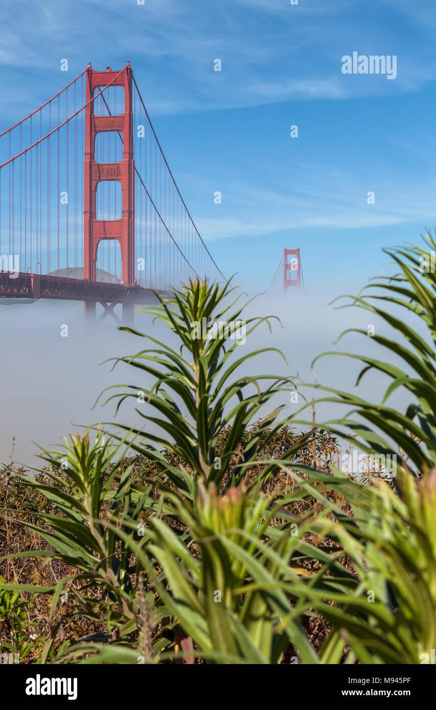 L'emblématique pont du Golden Gate, à faible brouillard sous le pont, et la fierté de l'usine de Madère sur le premier plan, San Francisco, California, United States. Photo Stock
