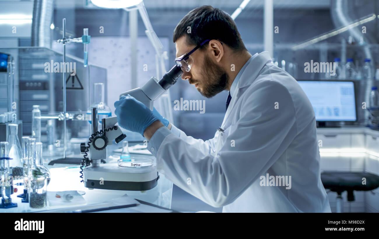 Dans un laboratoire moderne de recherche en chef Scientist Examining substance dans une boîte de Petri sous microscope. Photo Stock