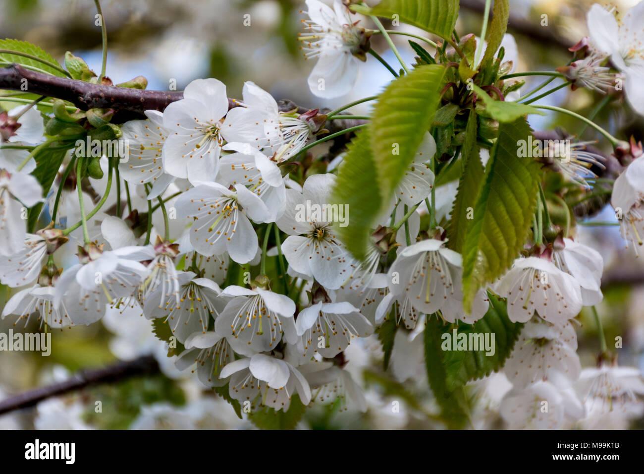 La beauté de la saison du printemps Photo Stock