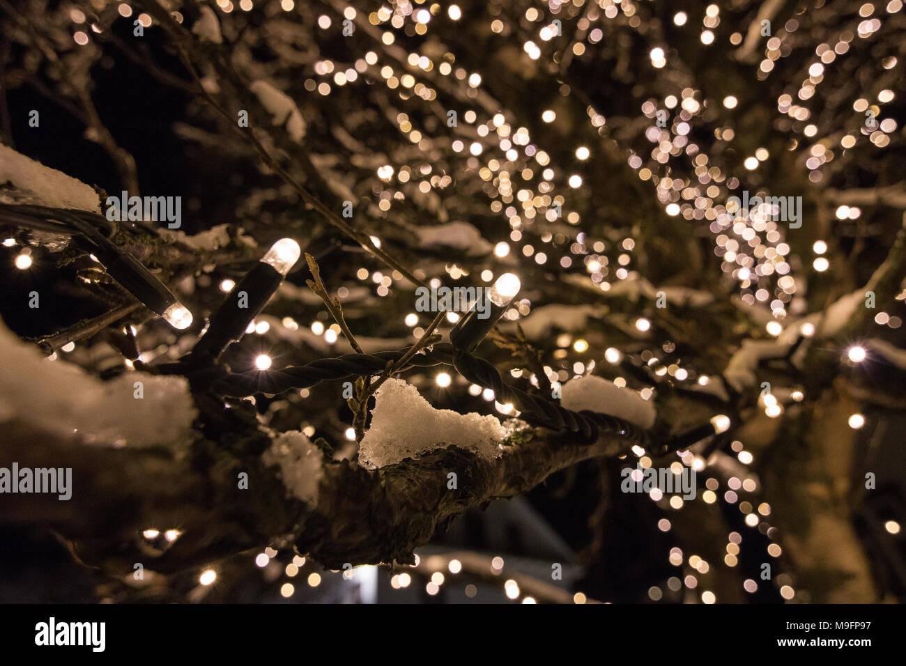 Un arbre décoré dans Hallargardurinn park près du lac à Reykjavik par nuit. Photo Stock
