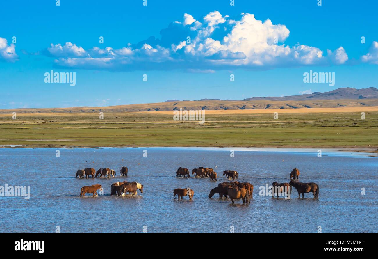 Troupeau de chevaux sauvages dans le lit de la rivière Tuul, Parc National de Gorkhi-Terelj, Mongolie Photo Stock
