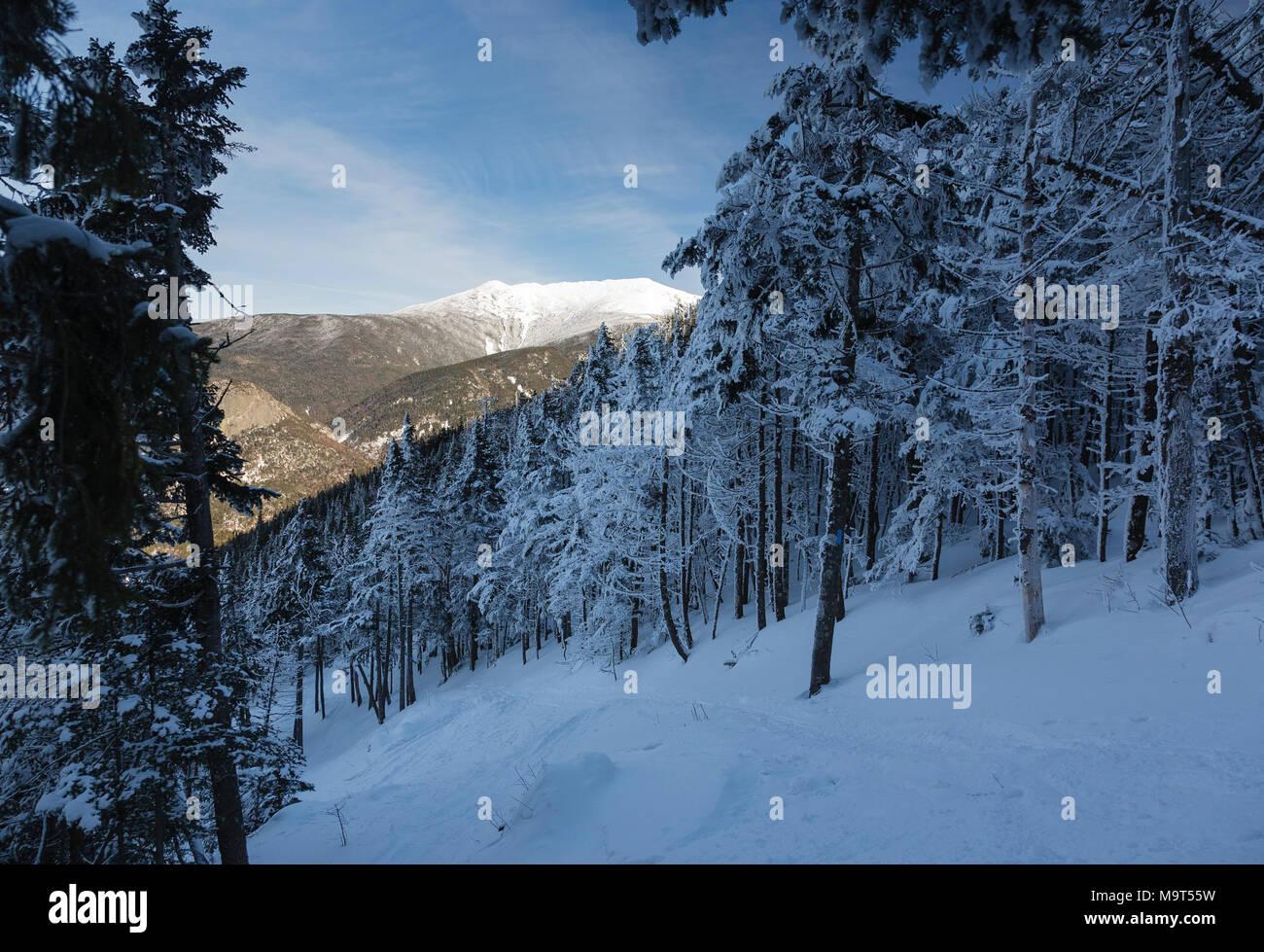Franconia Notch State Park - mont Lafayette le long de Kinsman Ridge Trail dans les Montagnes Blanches (New Hampshire). Ce sentier mène au sommet du C Banque D'Images