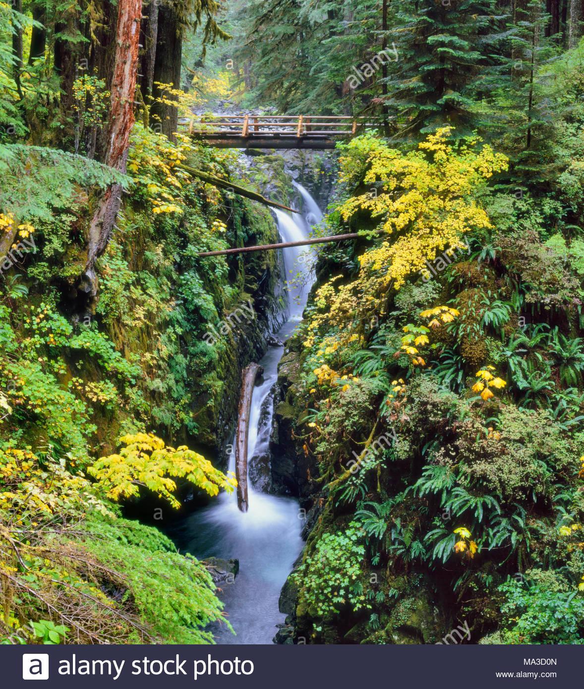 Sol Duc Falls et la rivière en automne, Olympic National Park, Washington Photo Stock