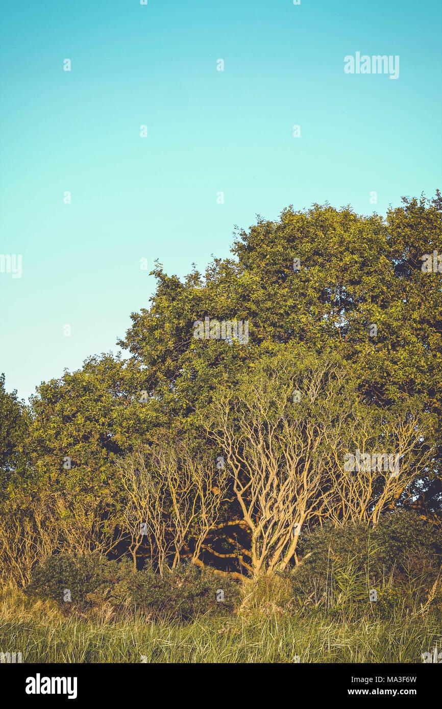 Forêt, ciel sans nuages, copy space Photo Stock