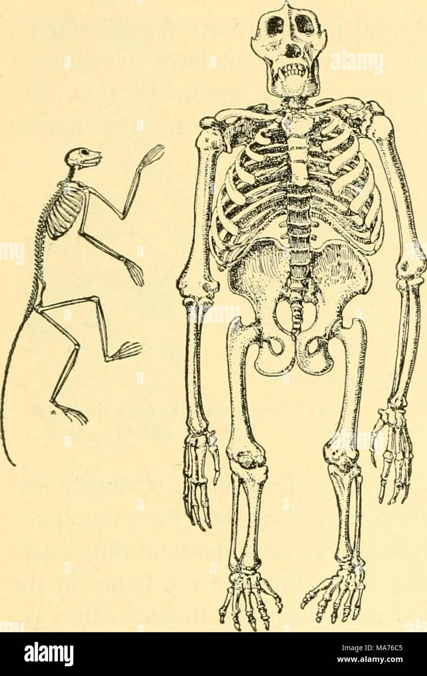 . La biologie élémentaire; une introduction à la science de la vie . Banque D'Images