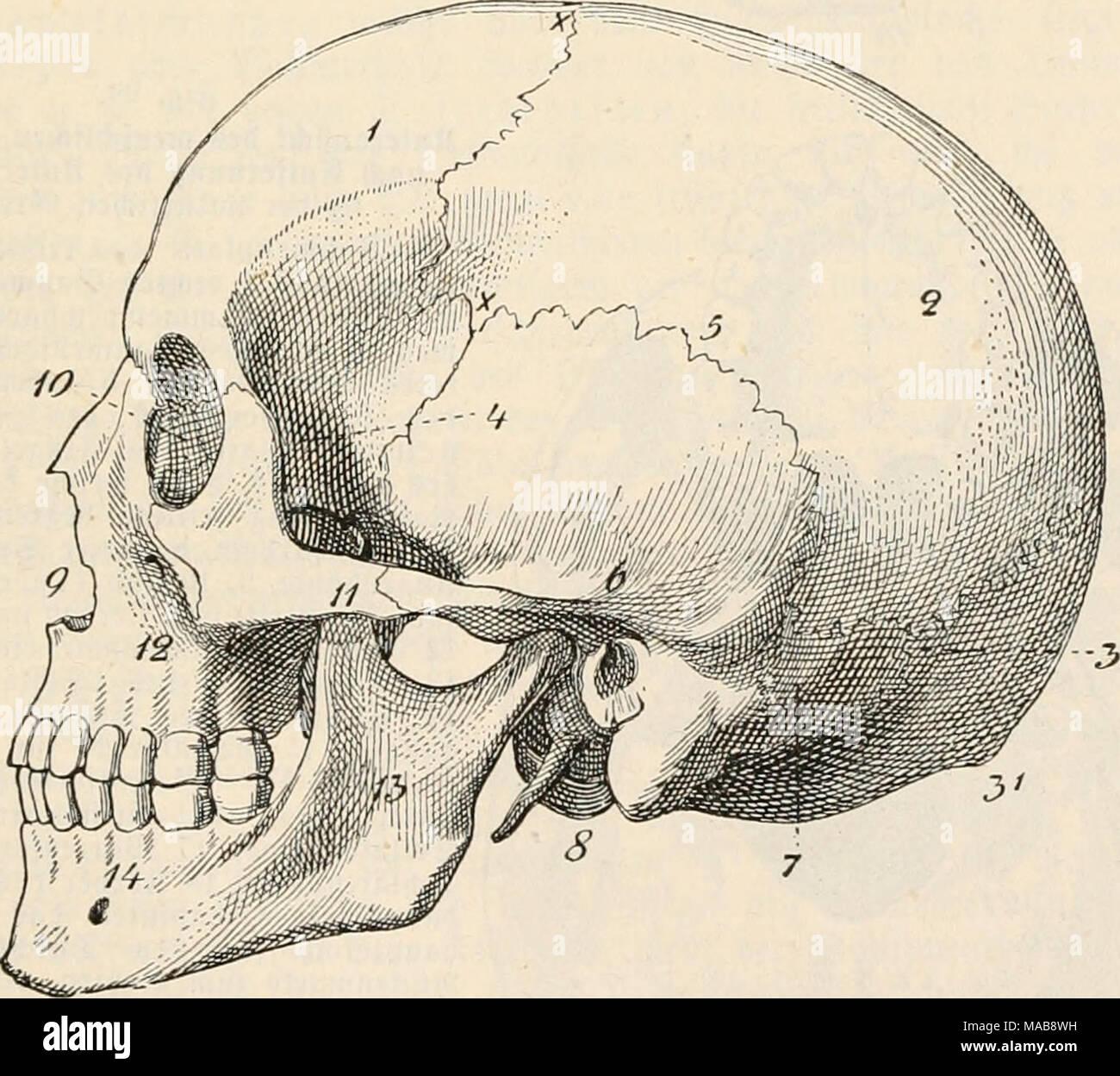 Ungewöhnlich Stirnbein Fotos - Menschliche Anatomie Bilder ...
