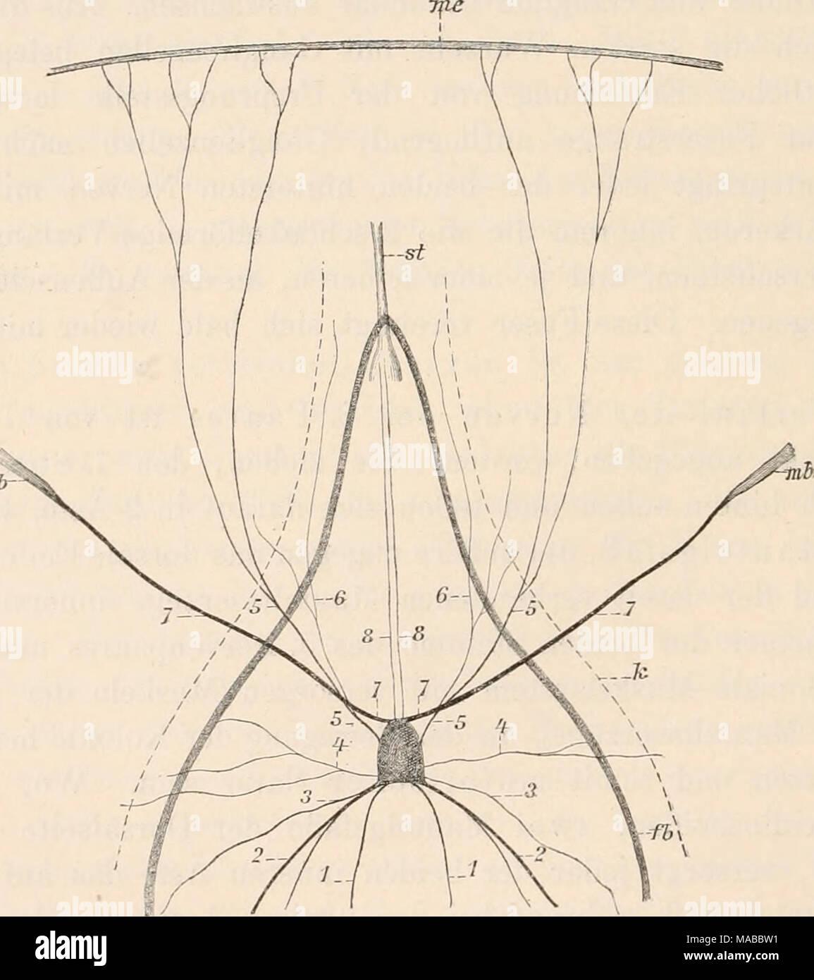 Atemberaubend Muskelsysteme Galerie - Anatomie Und Physiologie ...