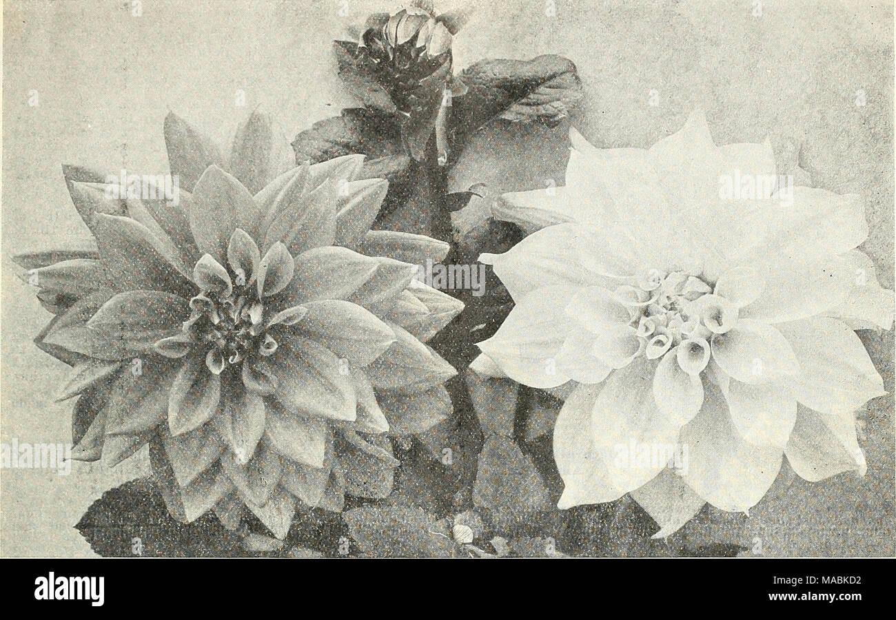 Coloriage Fleurs Bulbe.Dreer S Liste Des Prix De Gros Pour Les Fleuristes Semences De