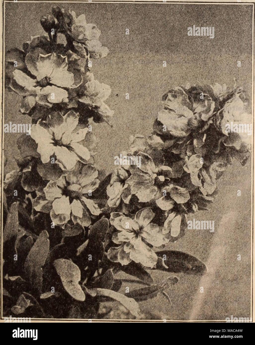 Fleur-Grosses graines-paquet illustré-Stock-Mélange semaine nain dix