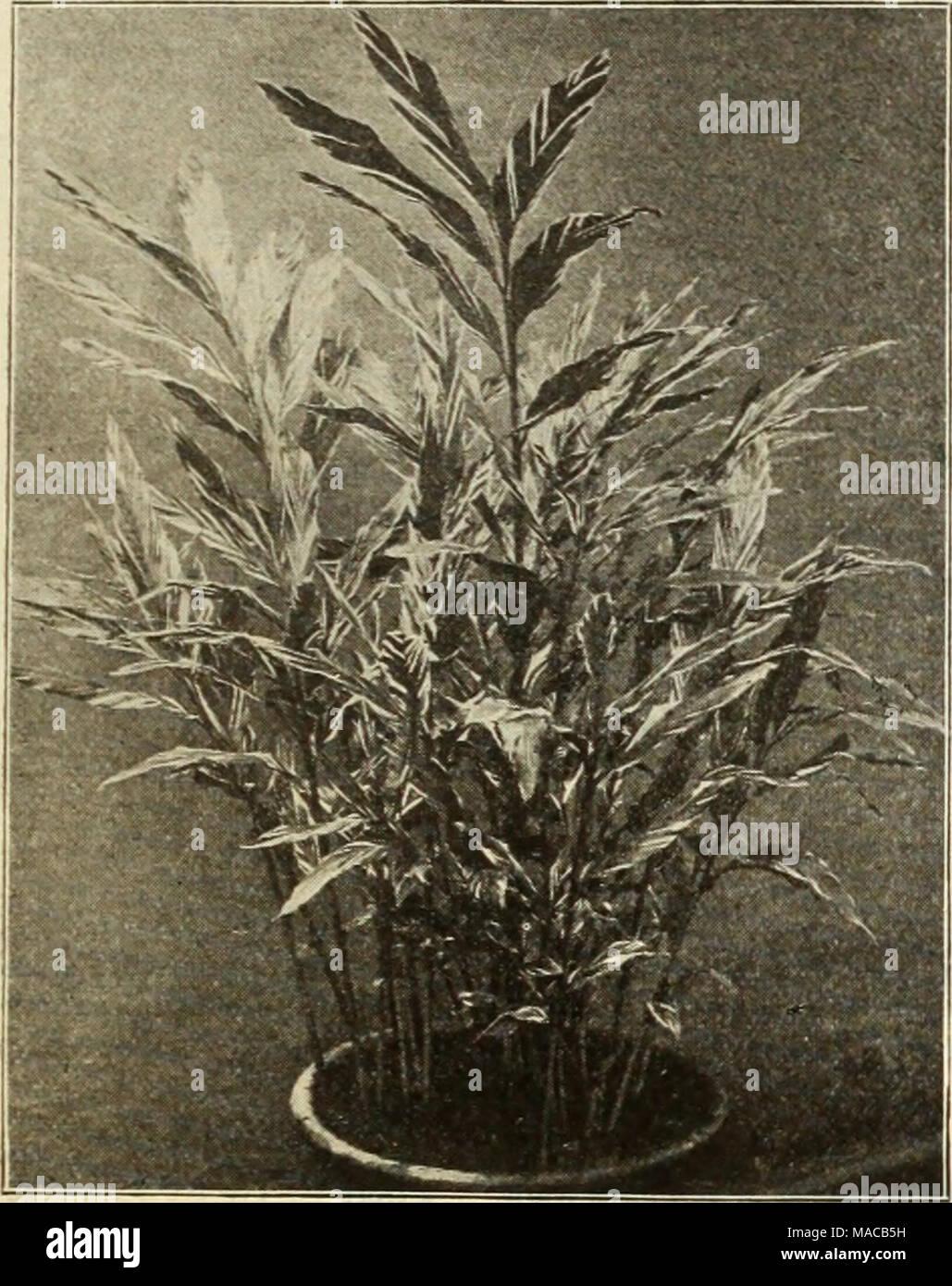 Dreer S Liste Des Prix De Gros Et D Autres Plantes Decoratives