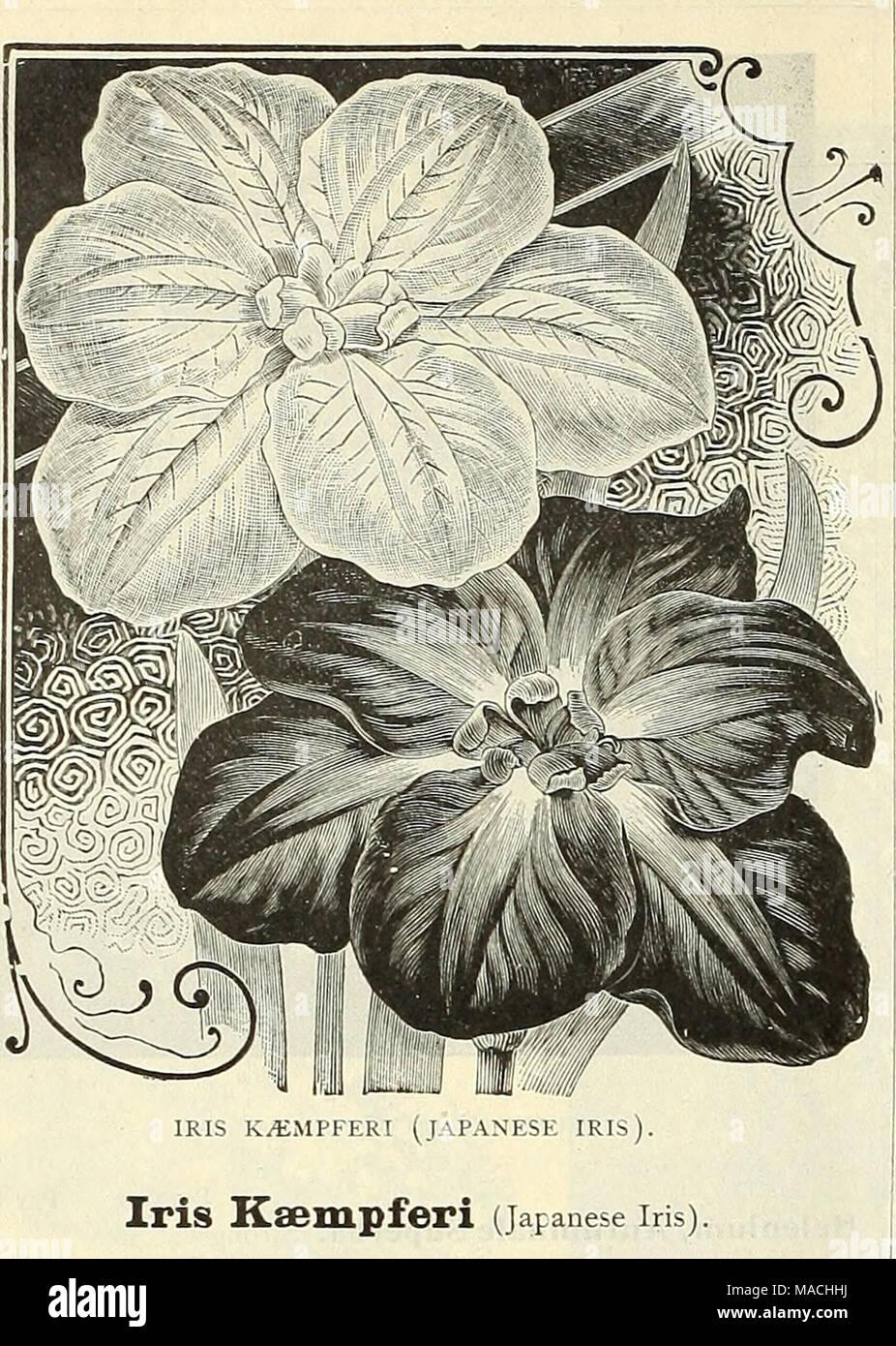 Coloriage Fleurs Bulbe.Dreer Prix De Gros Bulbes Plantes Graines De Fleurs Graines De