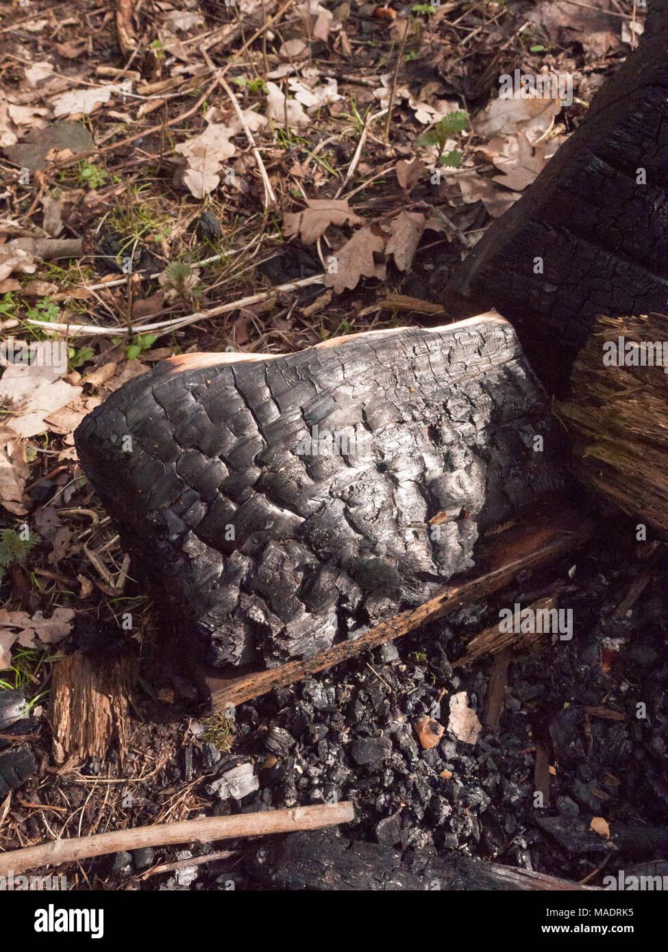 close up black texture de souche d 39 arbre carbonis br l charbon de bois des for ts essex. Black Bedroom Furniture Sets. Home Design Ideas
