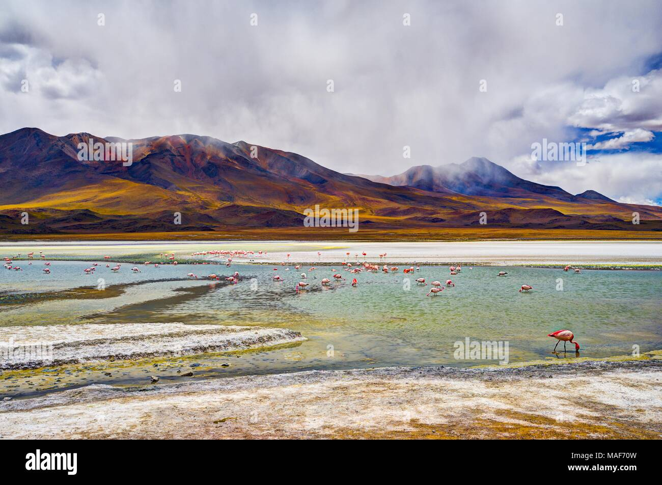 Lagune de l'altiplano en Bolivie, Southamerica Photo Stock