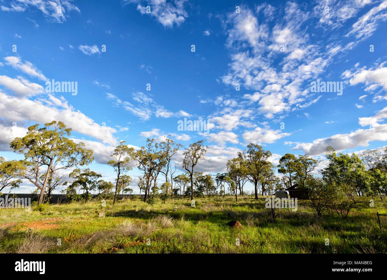 Savannah en haut de Porcupine Gorge National Park, Queensland, Queensland, Australie Photo Stock