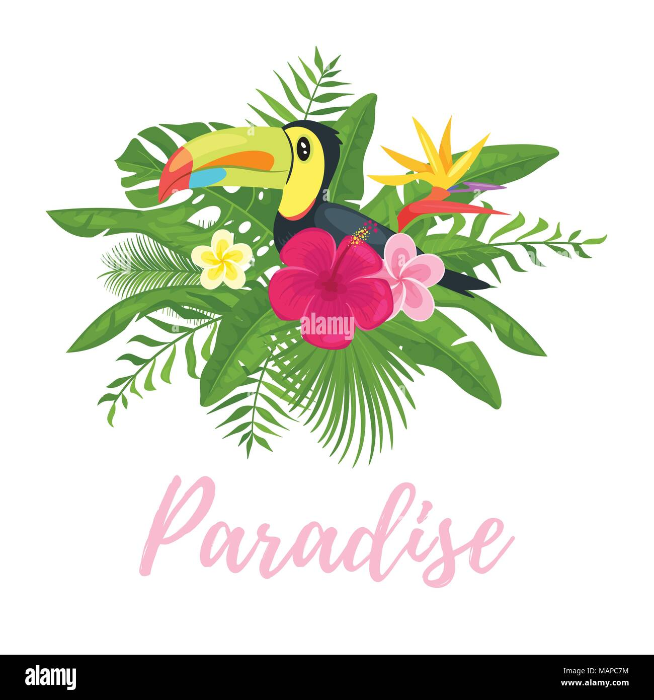 bird paradise plant cartoon photos bird paradise plant cartoon images alamy. Black Bedroom Furniture Sets. Home Design Ideas