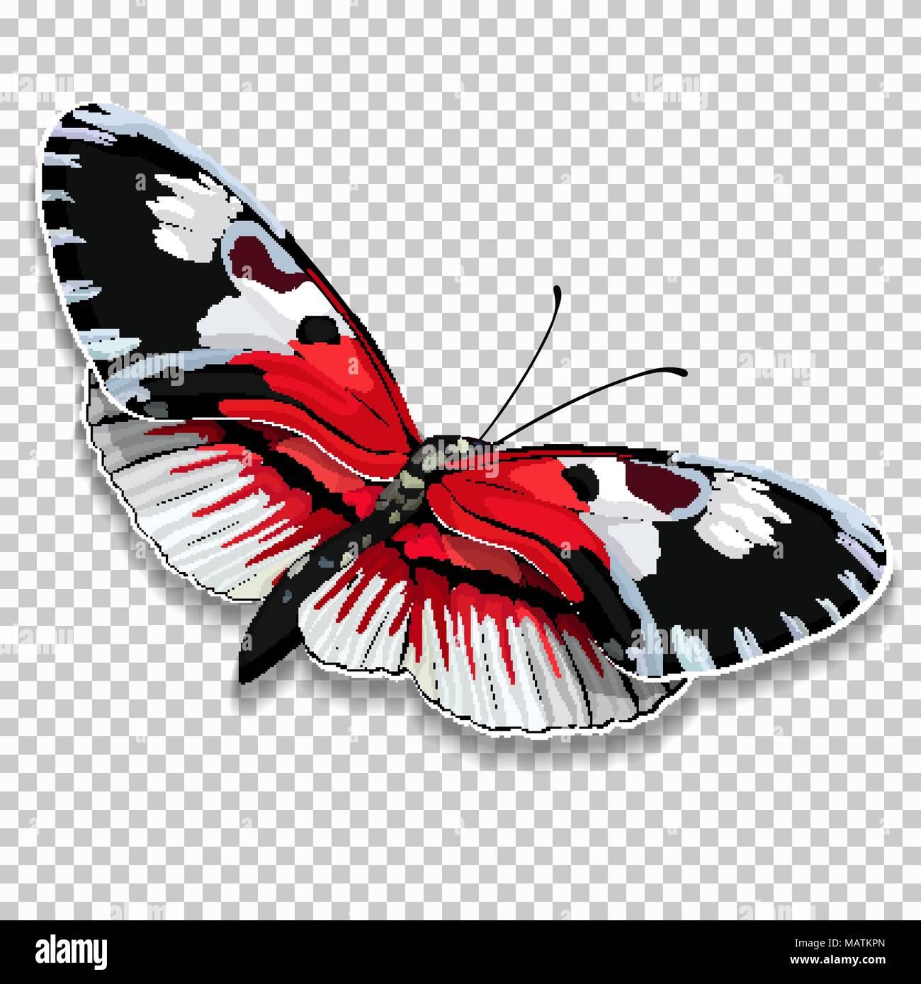 Beau Papillon Avec Des Ailes Noir Et Blanc Rouge Sur Un Fond