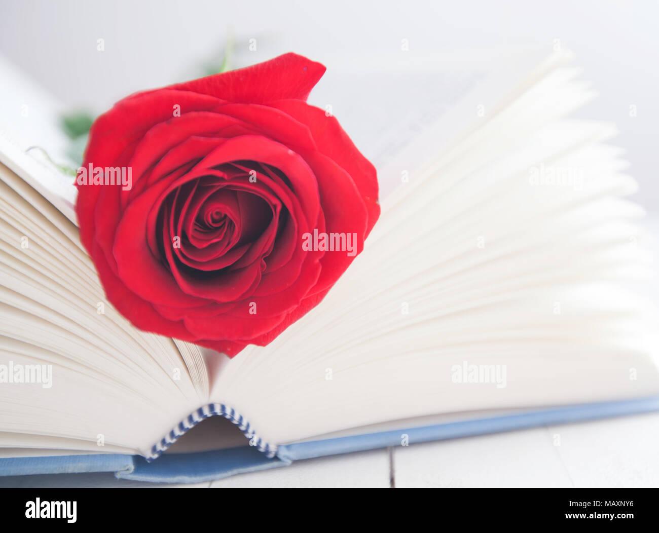 Fleur Rose Rouge Sur Livre Ouvert Sur Fond De Bois Blanc Romantique