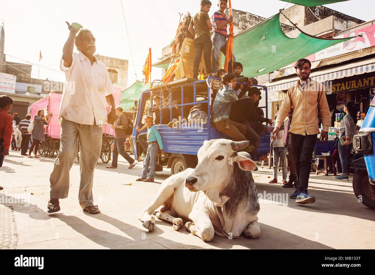 Holy Cow dans le trafic de rue de la ville de Pushkar, Inde, le 13 février 2018 Photo Stock
