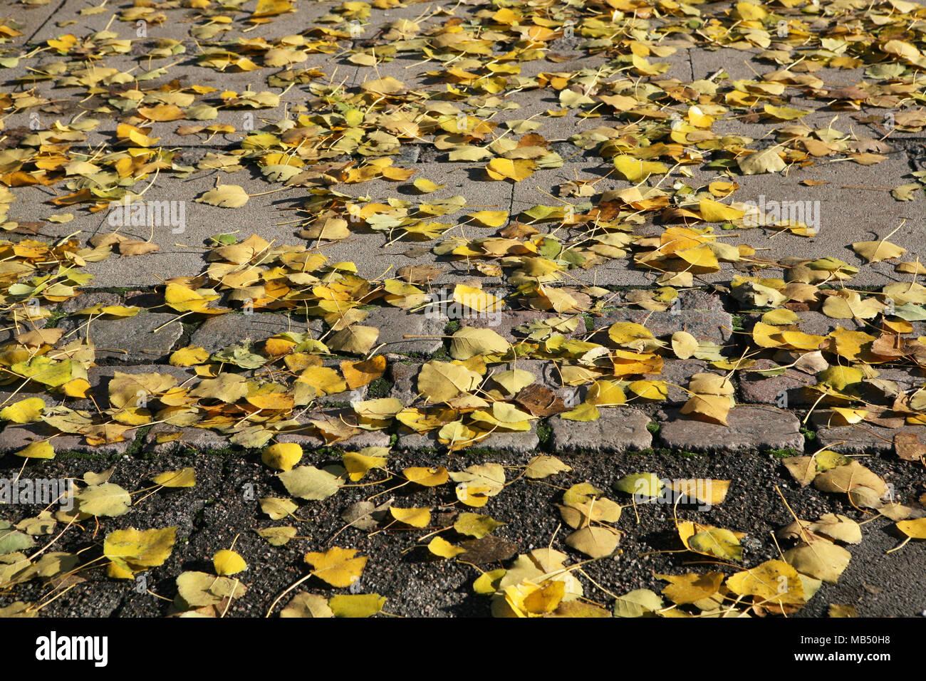 Jaune Brun automne automne feuilles sur le trottoir Photo Stock