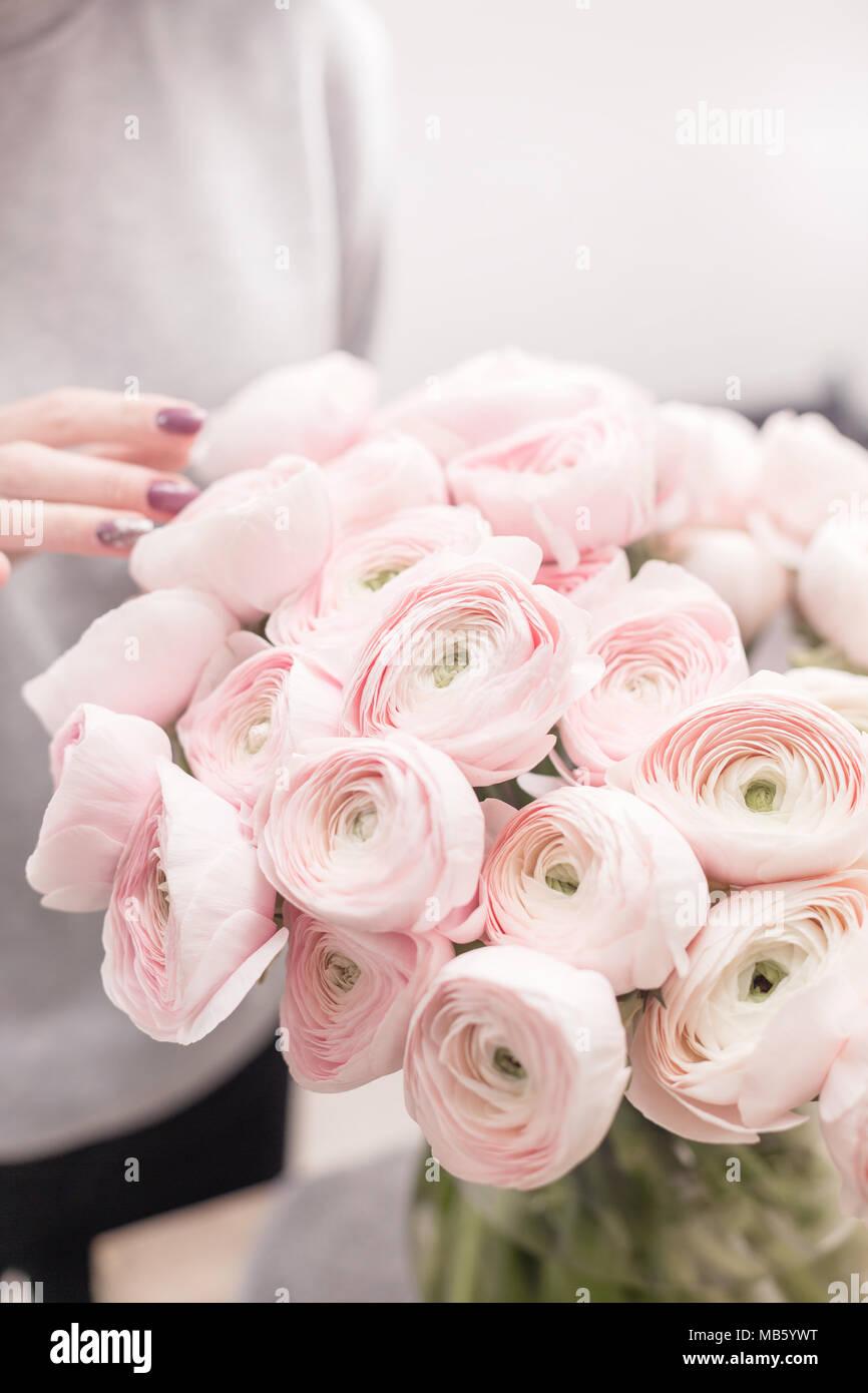 Renoncule De Perse Bouquet De Renoncules Roses Fleurs Fond Clair