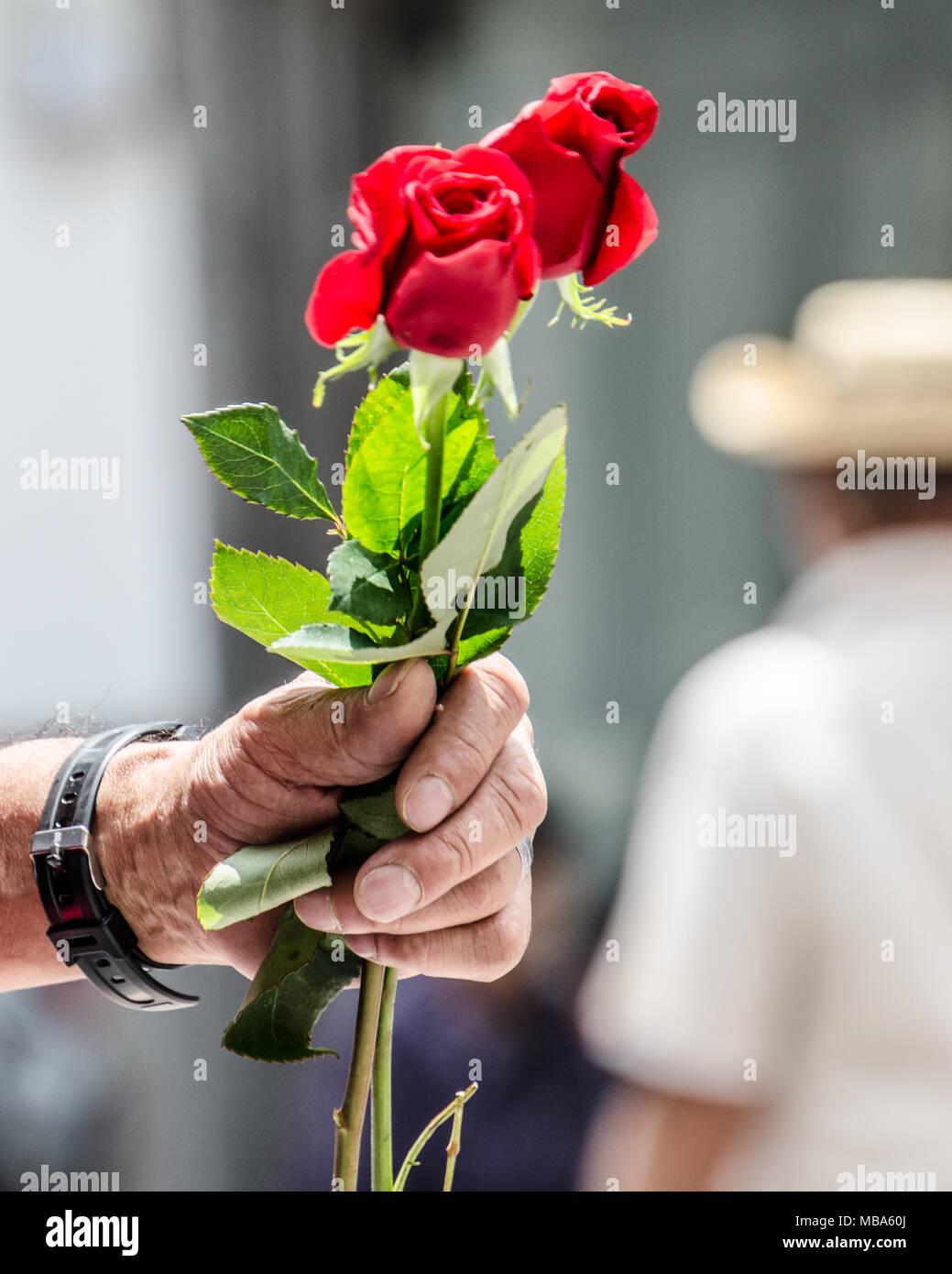 L'amour et de romances, Close up of hand holding les roses on city street. - À Quito, Équateur. Photo Stock