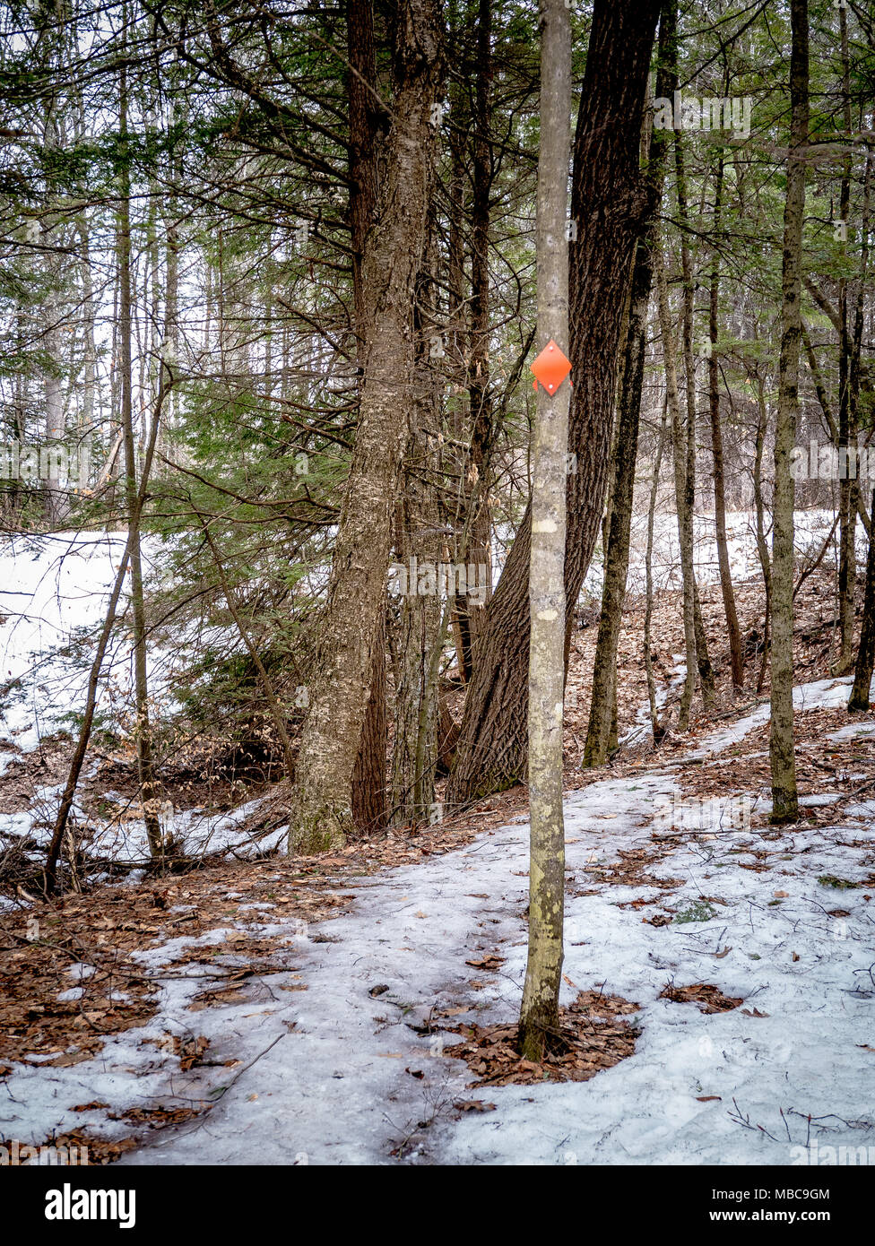 Marques et signes trouvés lors d une randonnée au début du printemps en Nouvelle  Angleterre d5ce0951884