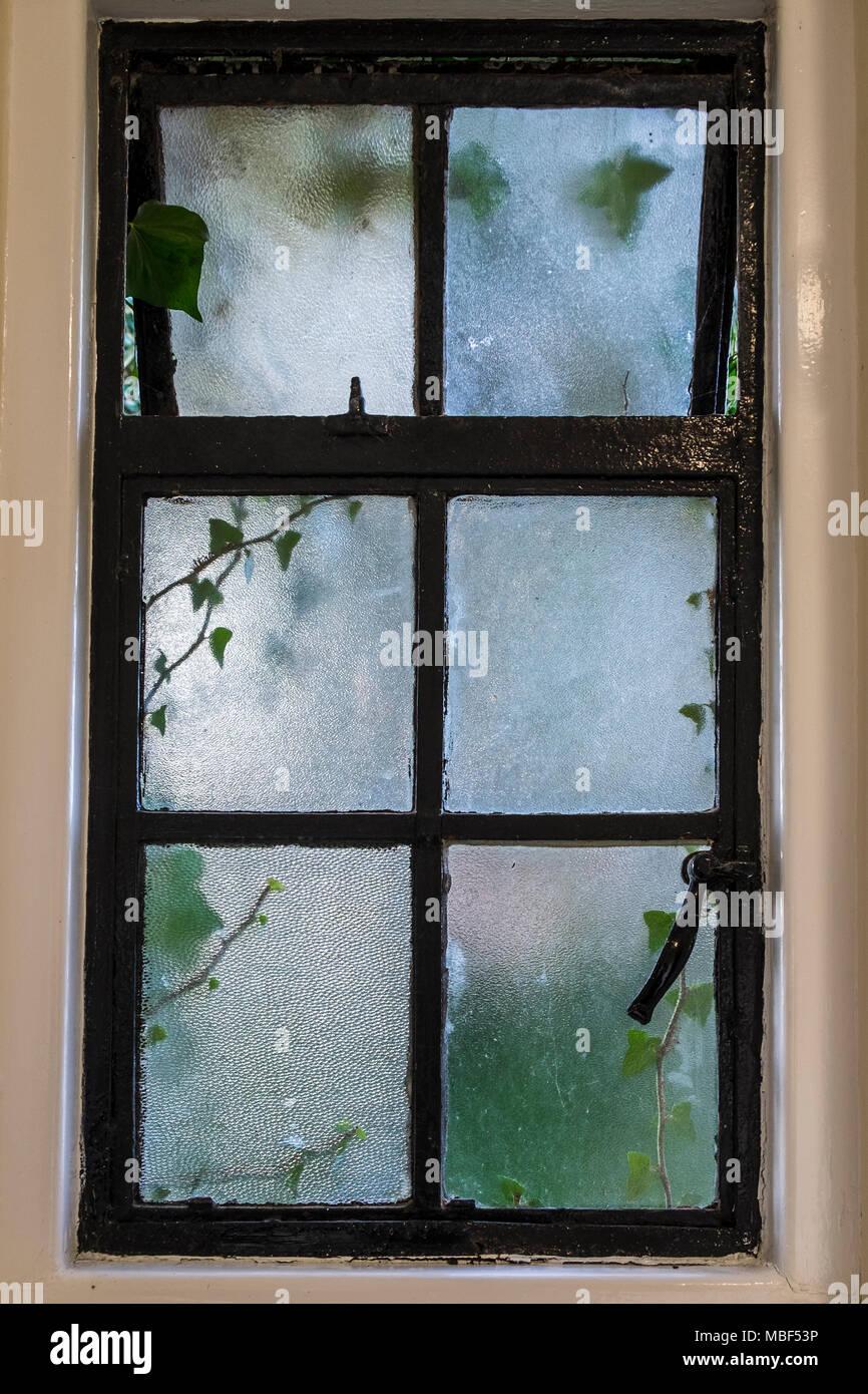 Crittall Ancienne Fenêtre Avec Verre Dépoli Et Ivy Croître Au Cours