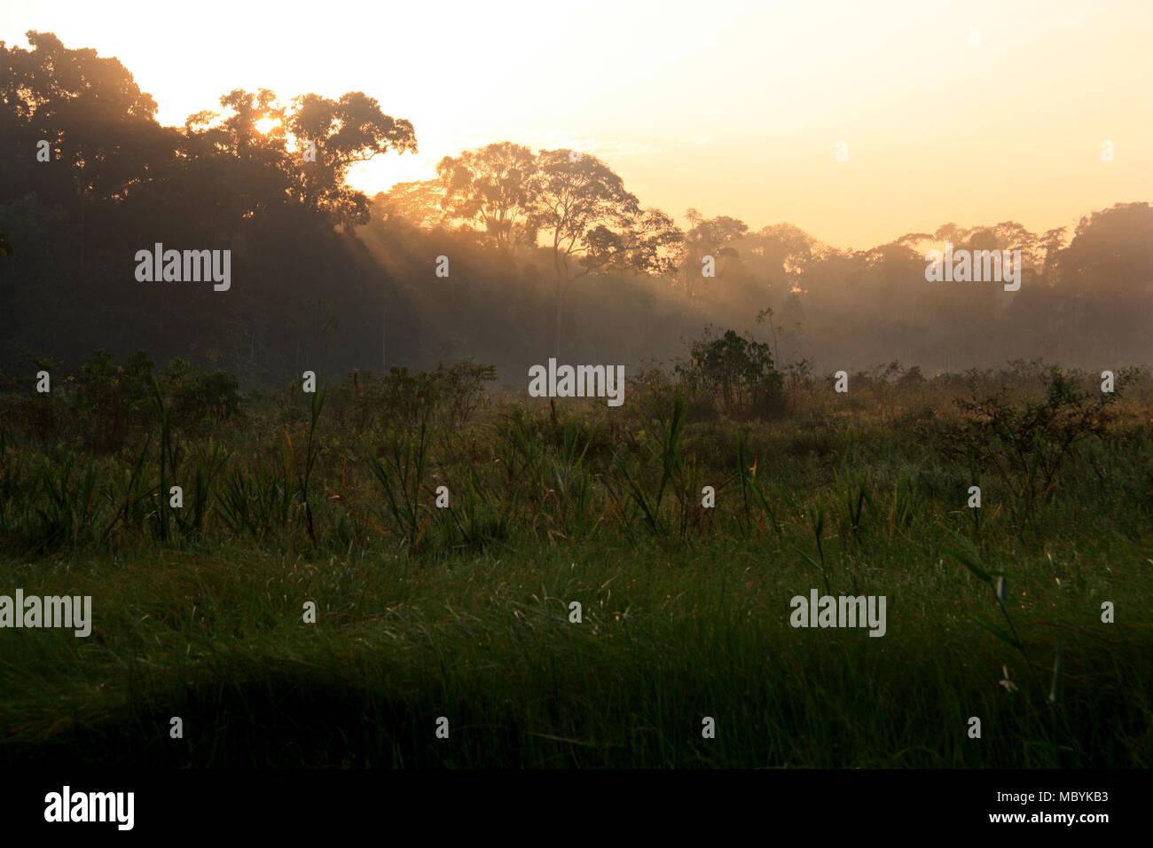 À l'aube dans la forêt amazonienne, Réserve nationale de Tambopata, à Puerto Maldonado, Pérou Photo Stock