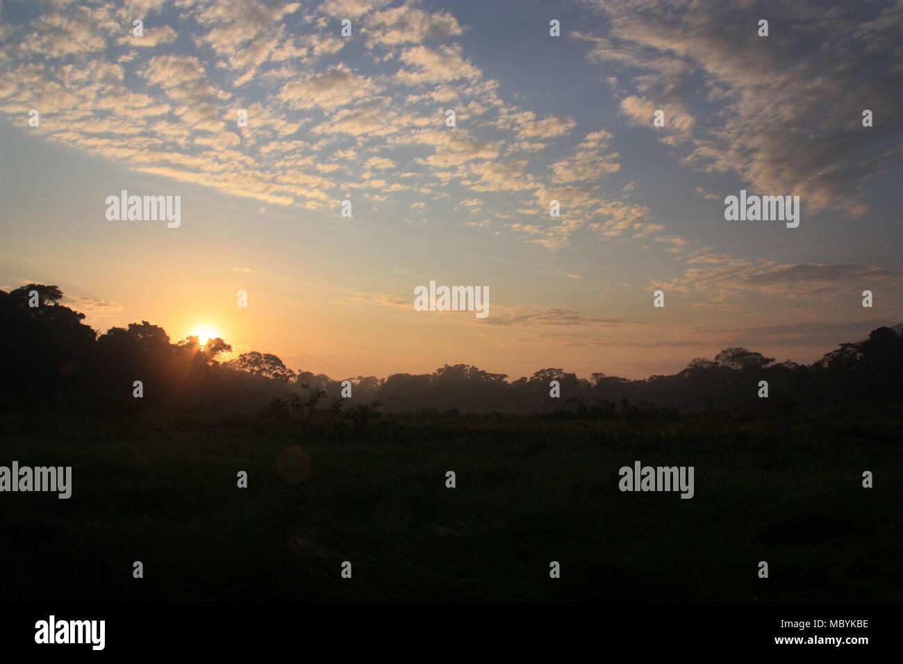 Lever de soleil dans la forêt amazonienne, Réserve nationale de Tambopata, à Puerto Maldonado, Pérou Photo Stock
