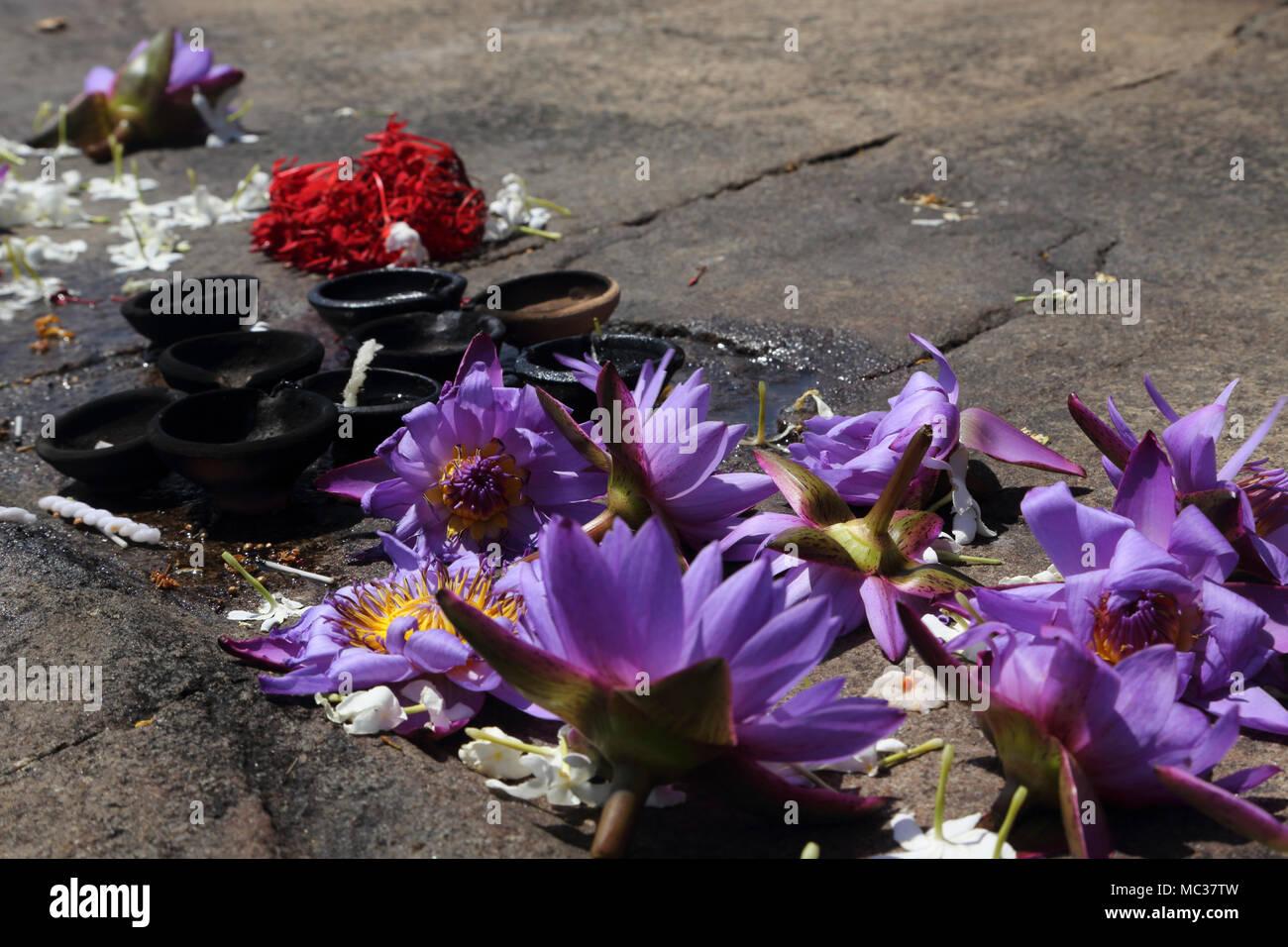 Anuradhapura North Central Province Sri Lanka Jetavanarama Dagoba fleurs de lotus et lampes à beurre Photo Stock