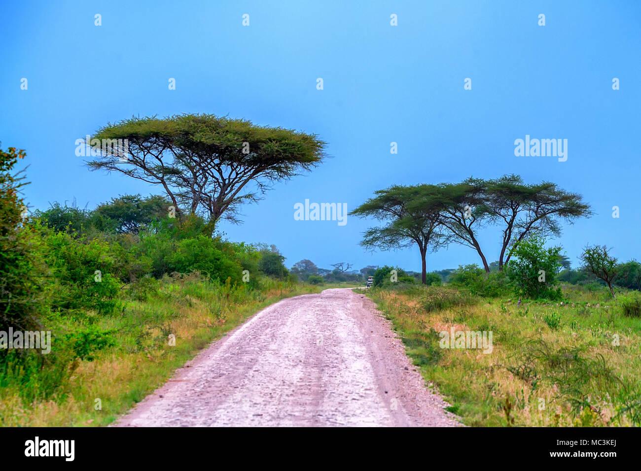 En route panoramique sur la forêt de l'Afrique Photo Stock