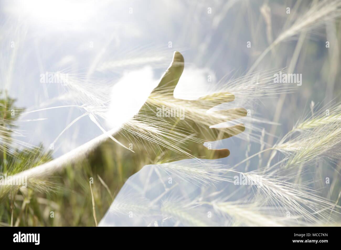 La main avec double exposition dans l'usine Photo Stock