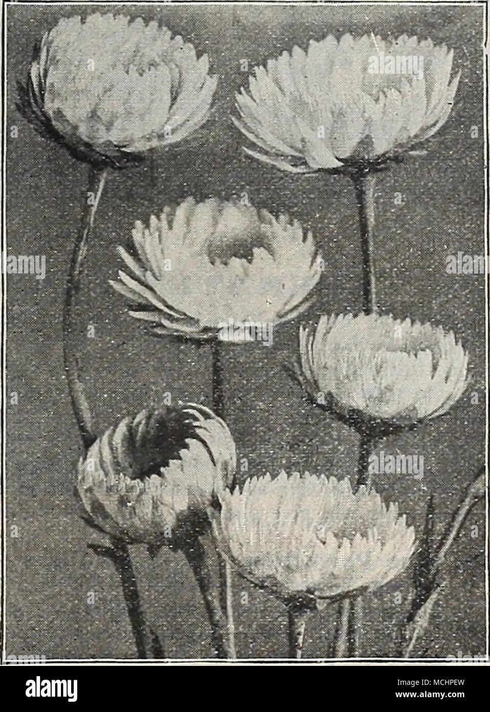 Cultive Environ 2 Pieds De Haut Et Du Printemps A Frost Est Couvert