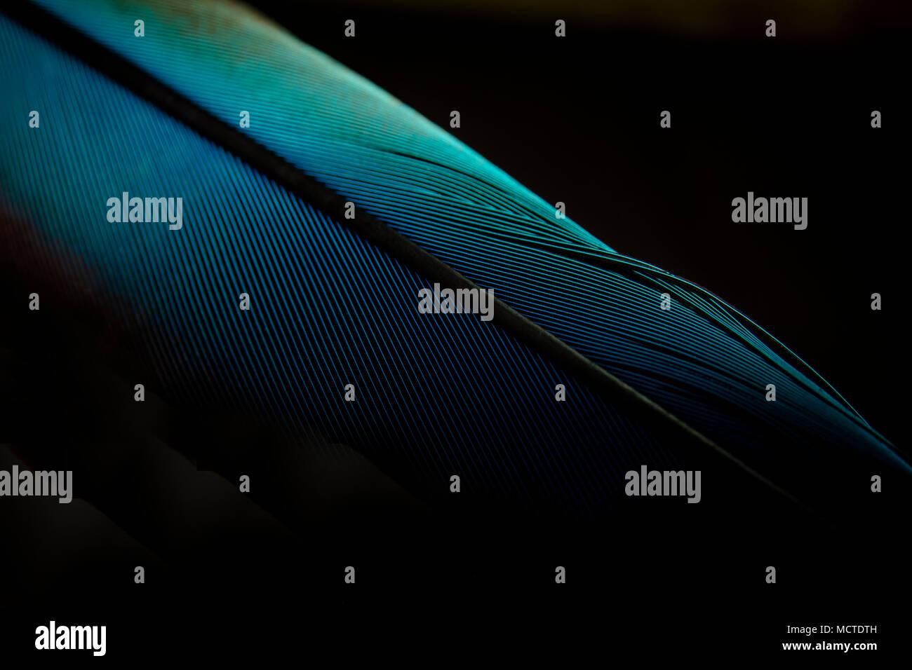 Une plume d'oiseau macro shot close-up Photo Stock