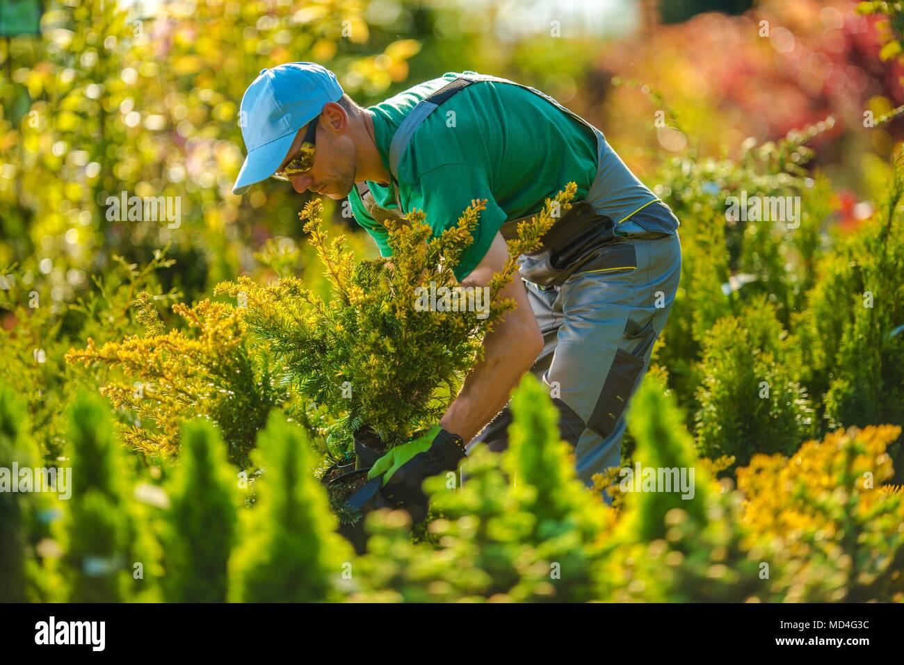Jardinier du Caucase à la recherche d'un nouveau projet de jardin pour les plantes. Aménagement paysager. Photo Stock