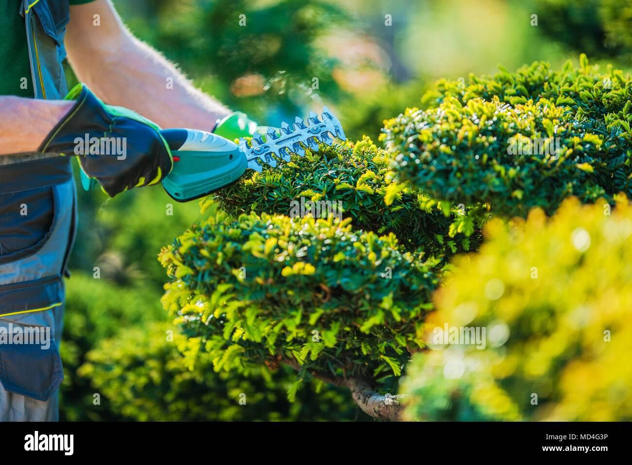 Topiaire plantes par fraisage débroussailleuse sans fil. Photo gros plan. Thème Jardinage professionnel. Photo Stock