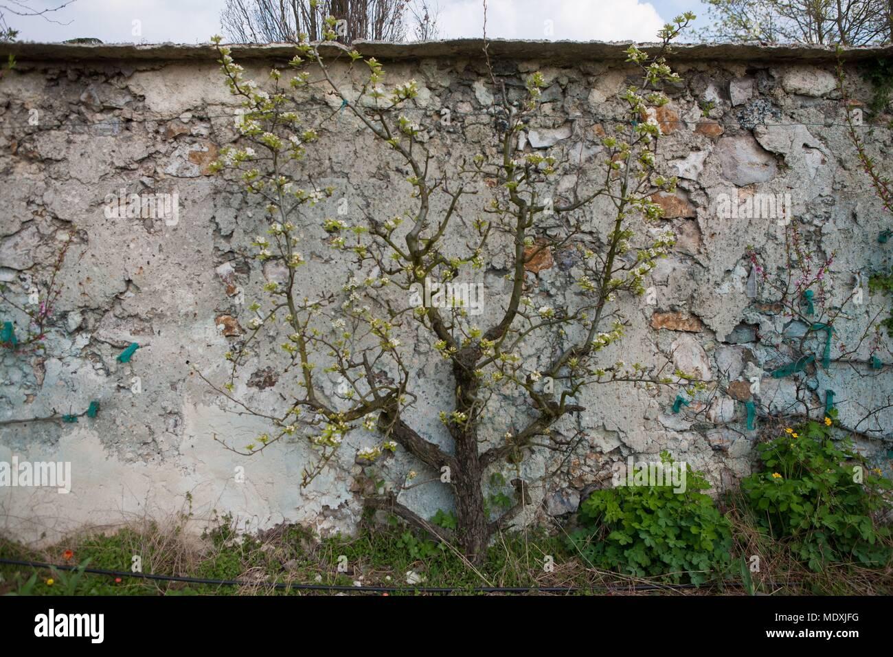 France Montreuil Sous Bois 4 Rue Du Jardin Ecole L Horticulture