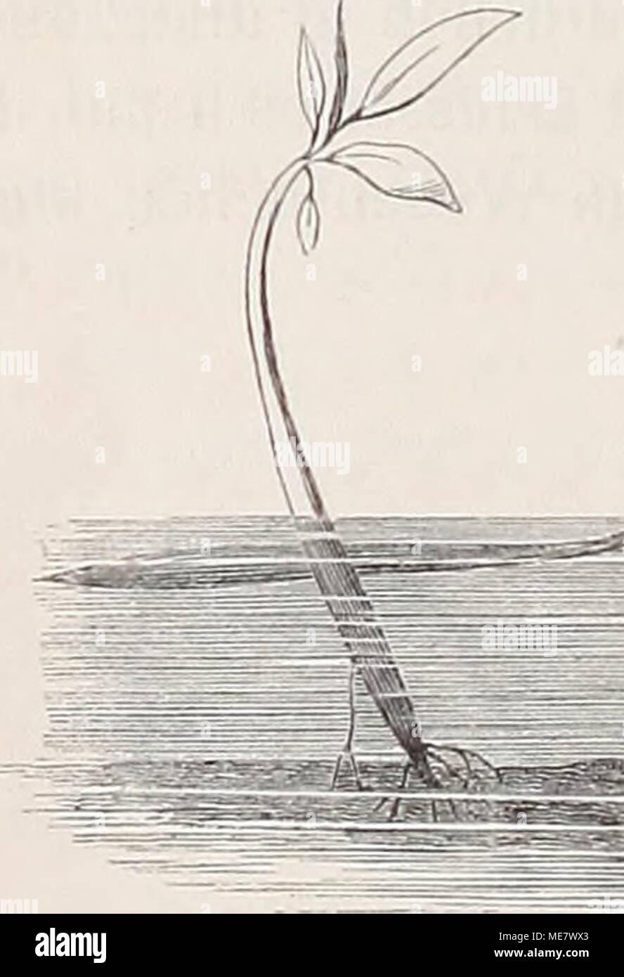 . Die Loango-Expedition ausgesandt von der Deutschen Gesellschaft zur Erforschung, Aequatorial-Africas 1873-1876. Dans Reisewerk Ein drei Abtheilungen . Banque D'Images