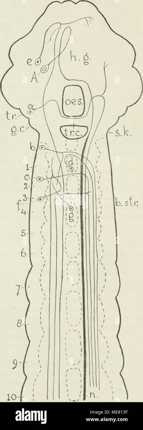 Ausgezeichnet Bauch Anatomie Diagramm Zeitgenössisch - Anatomie ...