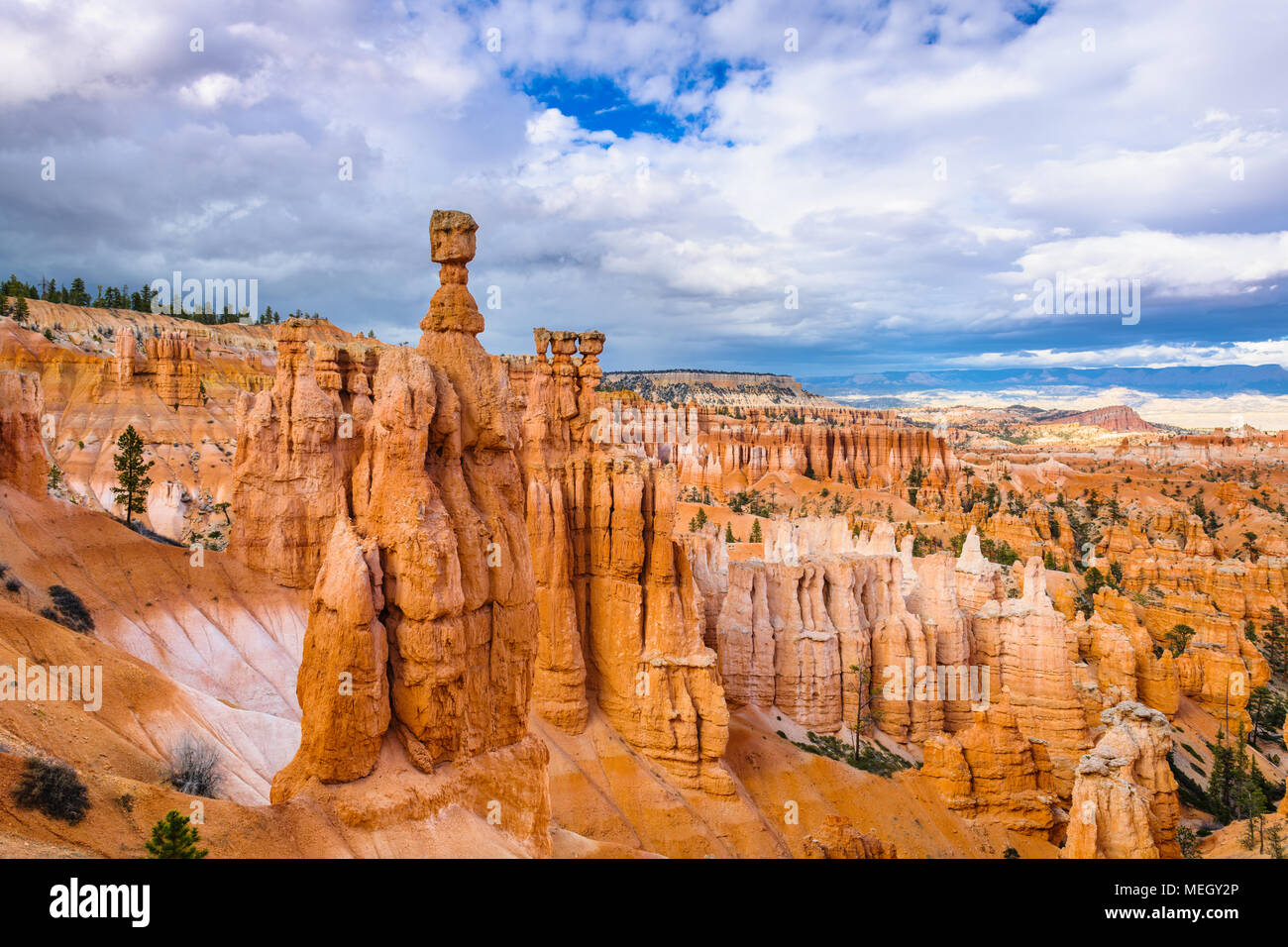 Bryce Canyon National Park, Utah, USA au Thor's Hammer. Banque D'Images