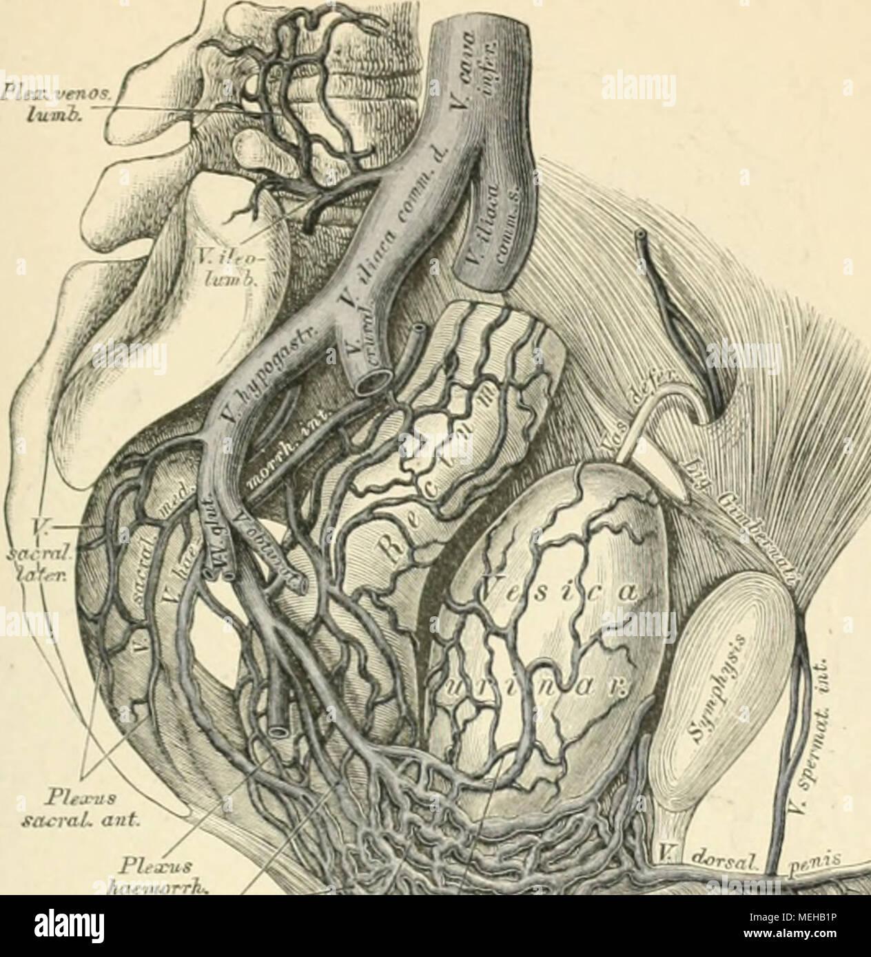Beste Visuelle Anatomie Und Physiologie 2. Auflage Ideen ...