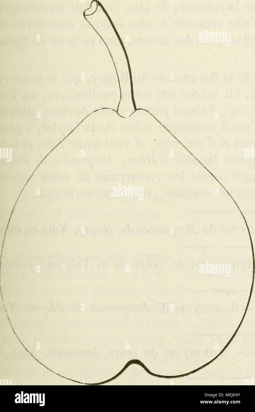 . Dictionnaire de mairie (Kiel), contenant l'histoire, la description, la figure des fruits anciens et des fruits modernes les plus G©N©ralement connus et cultiv©s . Synonjnies. Poires: bergamote Bugi (Dom Claude Saiot-Ãtienne, nouvelle ins- truction pour connaître les bons fruits, 1670, p. 81). Â2. Violette (/rf. e6?'rf. ) Âs.Pera Spina (Merlet, l'abre'gé des bons fruits, édition de 1675, p. 120j. 4. Du Ministre (Wem, édition de 1690,p. 106). Â5.Nicole {Id. ibid.). 6. Du Bugi (la Quintinye, Instructions pour les jardins fruitiers et potagers, édition de 1739, p. 275). 7. Grosse-R Banque D'Images