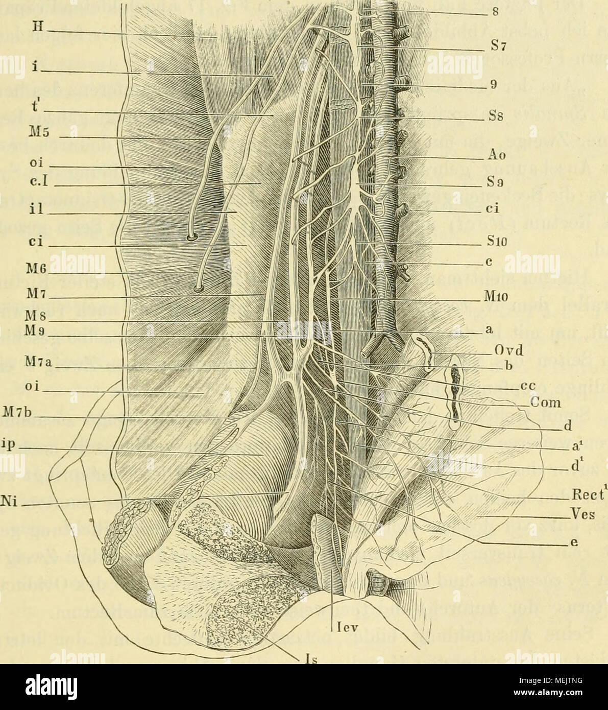 Wunderbar Anatomie Und Physiologie Saladin 7. Auflage Zeitgenössisch ...