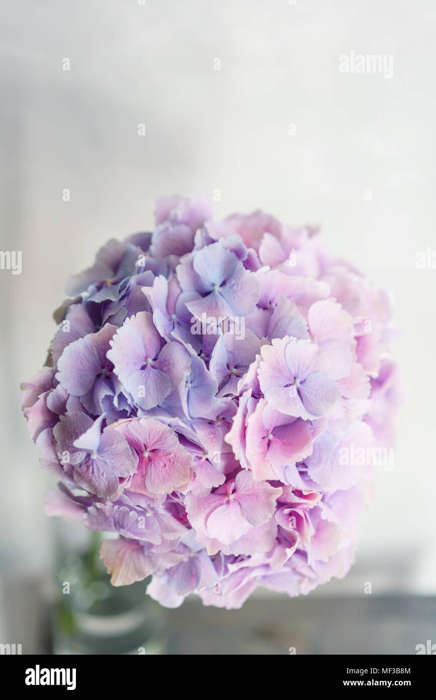 Hortensia Belle Fleurs Dans Un Vase Sur Une Table Bouquet De