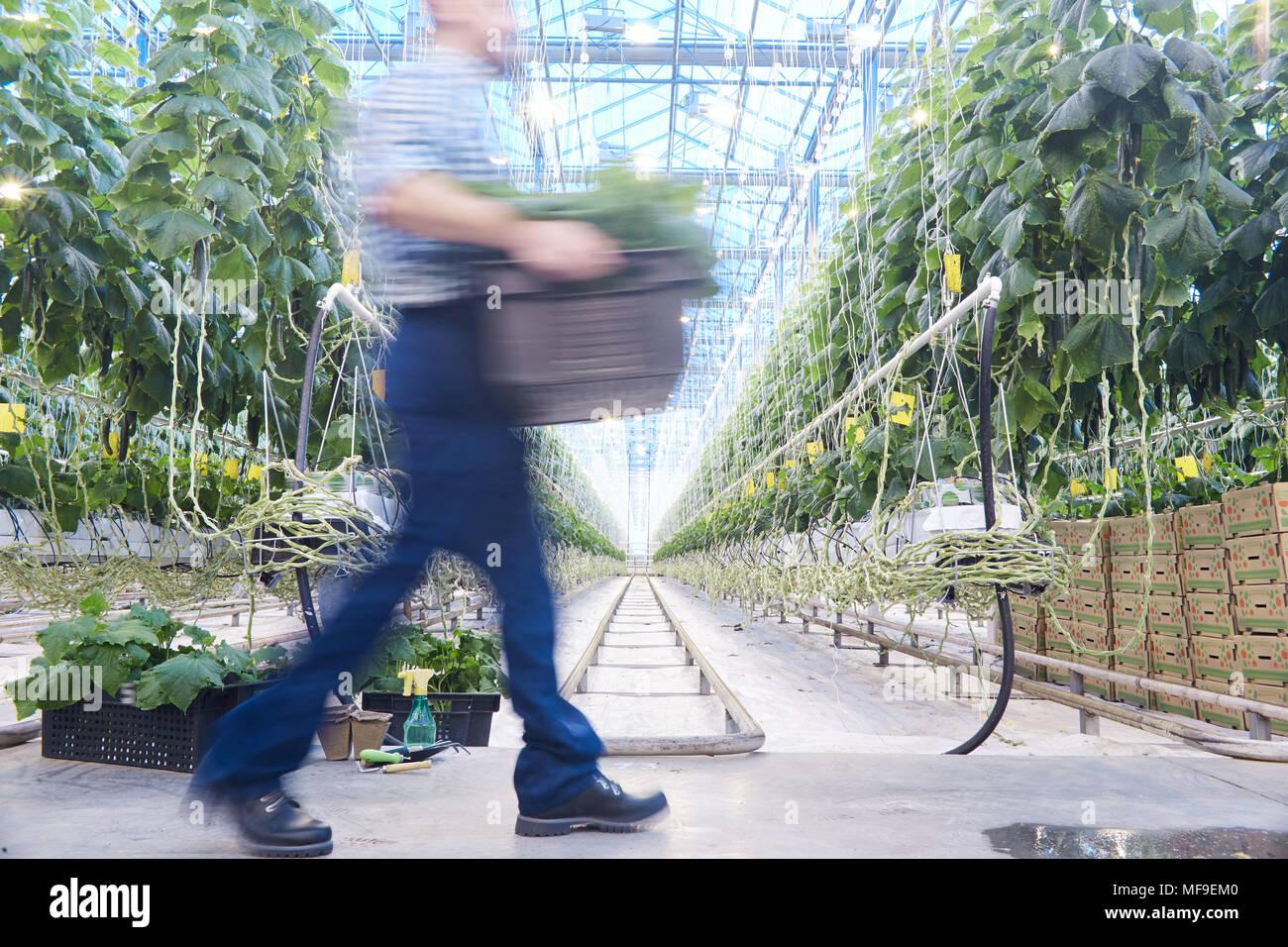 Plantation de légumes Photo Stock