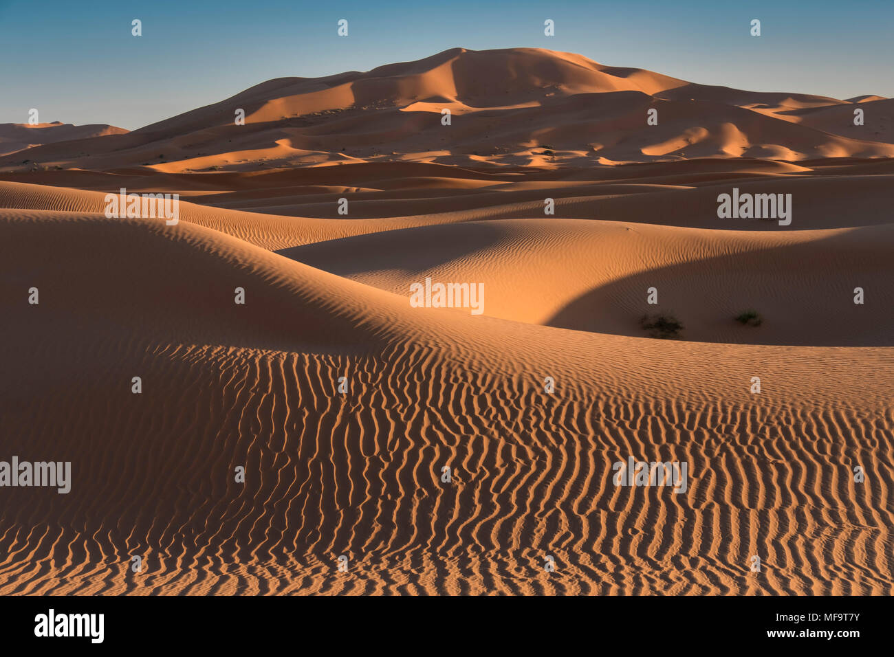 Mer de Sable, Erg Chebbi dunes du désert, Sahara occidental, Maroc Photo Stock