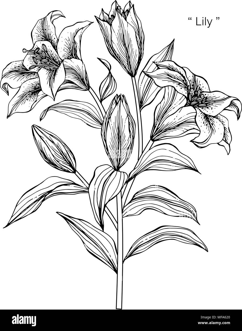 Illustration Dessin Fleur De Lys Noir Et Blanc Avec Dessin