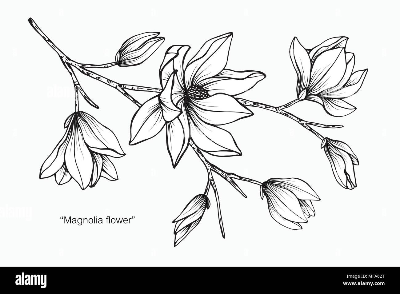 Illustration Dessin Fleur De Magnolia Noir Et Blanc Avec Dessin Au