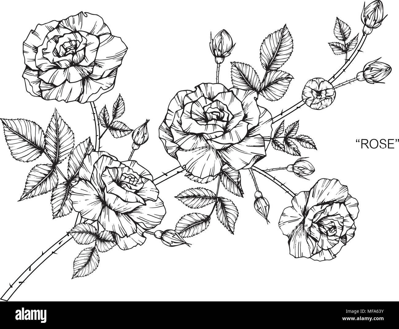 Fleur Rose Dimensions Illustration Noir Et Blanc Avec Dessin Au