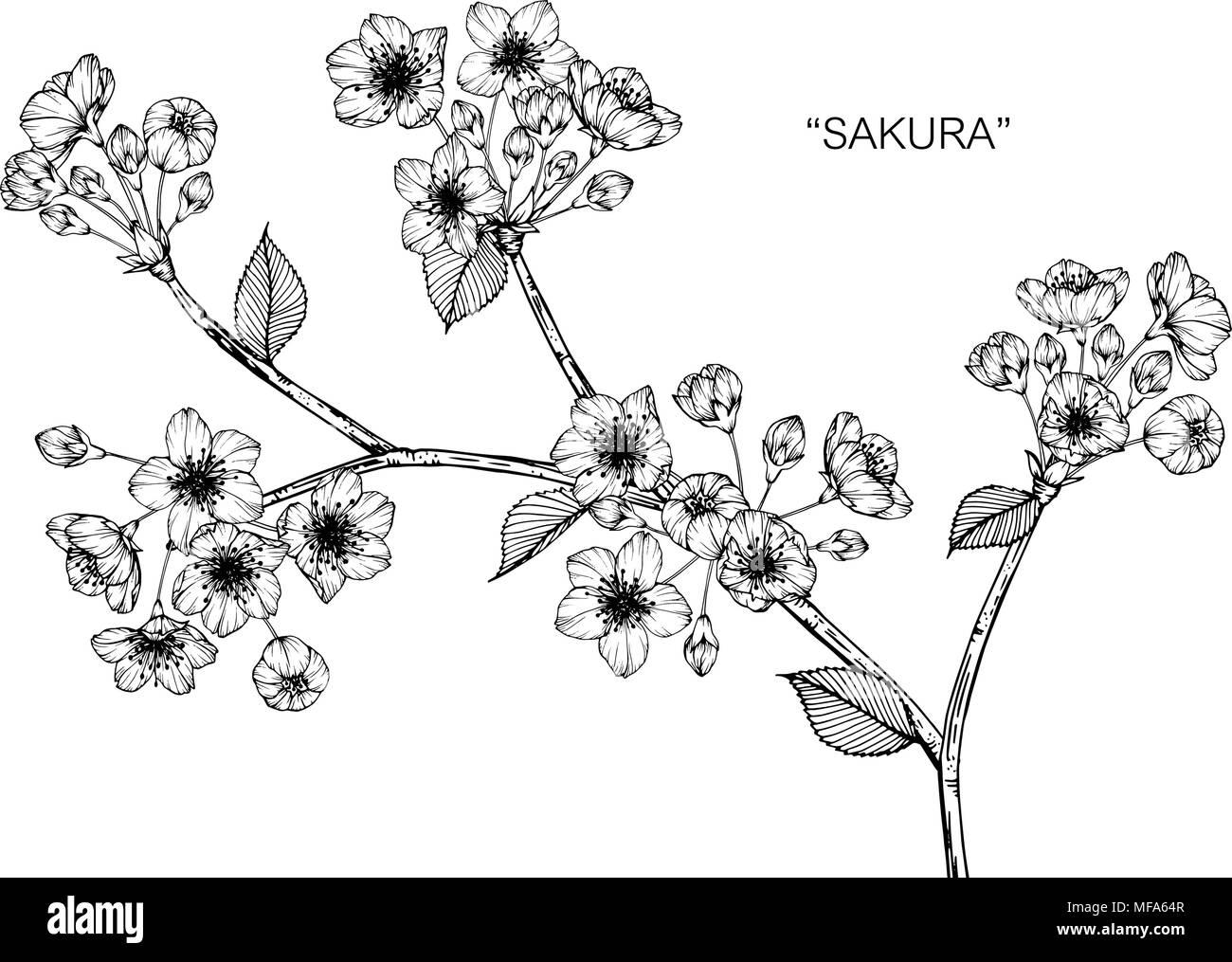 Dessin Fleur Sakura Illustration Noir Et Blanc Avec Dessin